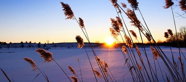 Talvisia heiniä_